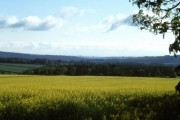 Oil Seed Rape field outside Snods Edge