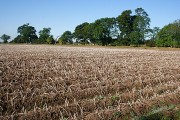 Tattie Field at Middle Drums
