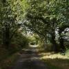Lane near Ditsham
