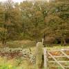 Tor Wood near Hazelford