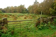 Birch woodland on the edge of Eyam Moor