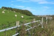 Farmland By The Way