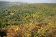 Bolehill Wood above Grindleford