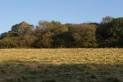 Woodland near Scattor