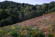 Undisturbed bracken and deciduous woodland