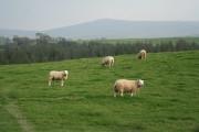 Sourton: near Thorndon Cross