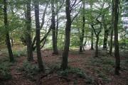 Woodland, Bush Estate