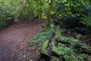 Footpath along the edge of Banstead Wood