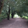 Yew walk, Chipstead Downs