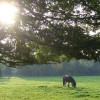 Grazing by Thornet Wood