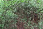 New Park Wood