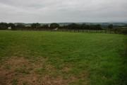 Horses at Elder Park, near Beaford