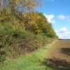 Field edge, Brundish