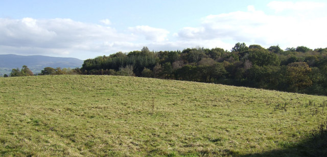 View over Tredurn Wood