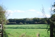 Looking towards King's Court Wood
