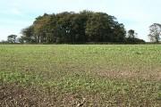 Bulkworthy: on Eastacott Moor