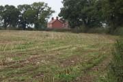 Maize stubble at Eastwick