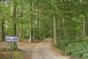 Bridleway through Nott Wood