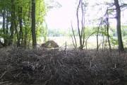 Edge of Bear Wood