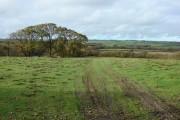 Meadow view near Cookbury Wick
