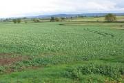 Farmland between Churcham and Minsterworth