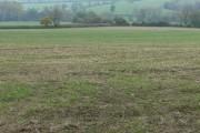 Farmland near Loddington in Leicestershire
