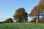 Crop Field in Autumn, Lower Netchwood, Shropshire