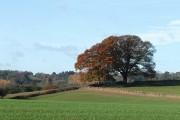 Crop Fields near Haughton, Shropshire