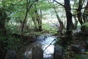 River Deer at Chilsworthy
