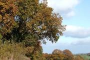 Crop Field by Chapel Farm, Lower Netchwood, Shropshire
