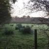 Field near Oakleigh Farm