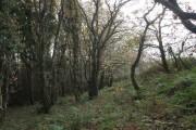 Panson Wood