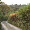 High Bickington: lane near Shuteley
