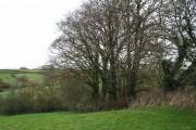 St Giles in the Wood: near Higher Barndown