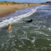 Hengistbury Head - Dogs Paradise