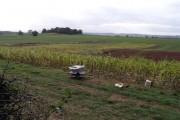 Corn patch near Chartley Hall
