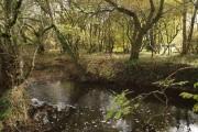 River Carey