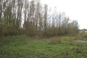 Woodland near River Yare