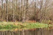 Woodland by the Cherwell