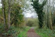Rea's Wood, Antrim (2)