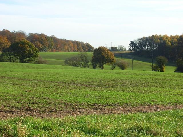 Arable fields, Binfield Heath