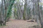 Nunn Wood