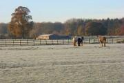 Horses, Mays Green