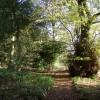 The woodland garden, Newfield Hall, Calton
