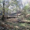 In Parkhouse Wood