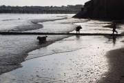 Dogs on Preston Sands