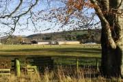 Grazing field at Old Mill Farm