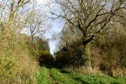 Woodland near Boothby Grange