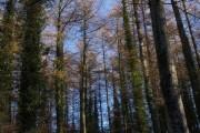 Gubbs Wood