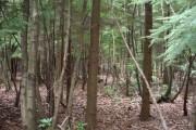 Part of Wildwood, near Herne